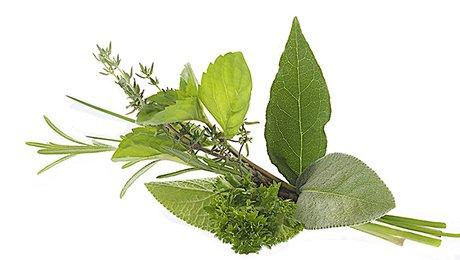 Bouturage des plantes aromatiques - Minutefacile.com