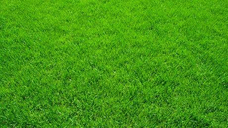 jardinage choisir une pelouse. Black Bedroom Furniture Sets. Home Design Ideas
