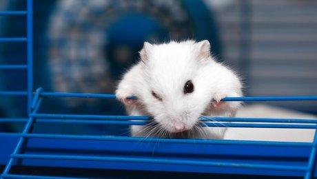 Hamster.co