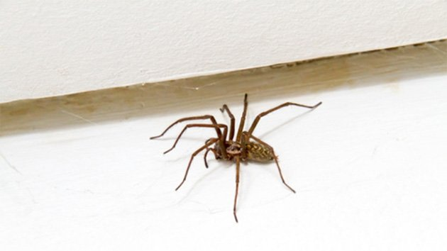 lutter contre les araign es et s 39 en d barrasser. Black Bedroom Furniture Sets. Home Design Ideas